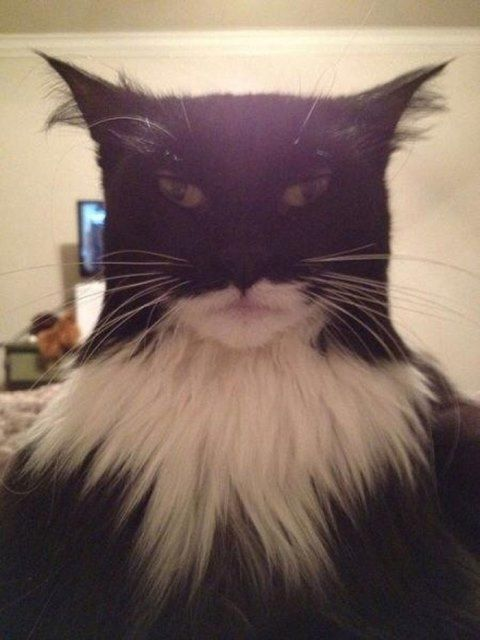 Grumpy Cat - Bildquelle: buzzfeed