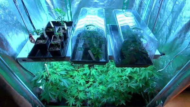 Marihuana-Boom USA