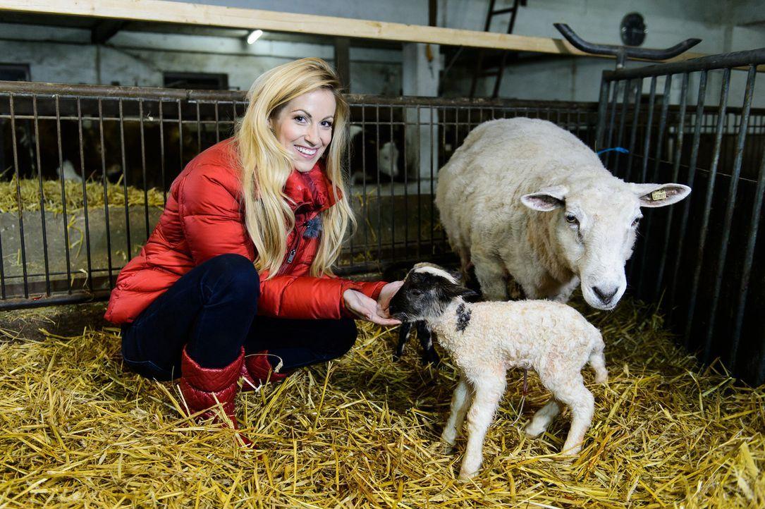 """In """"Die wunderbare Welt der Tierbabys"""" ist Andrea Kaiser dabei, wenn Schaf, Alpaka, Strauß und Co. das Licht der Welt erblicken ... - Bildquelle: Willi Weber Sat.1"""