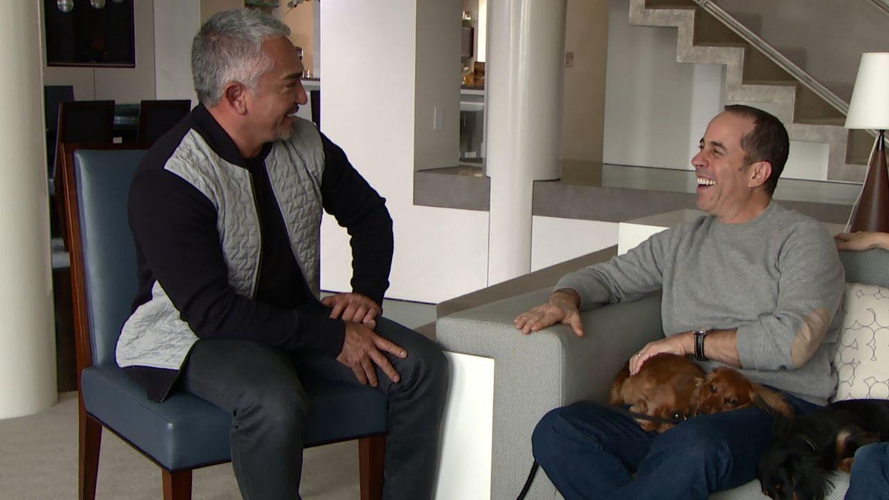 Wird es Cesar (l.) gelingen, dass Comedian Jerry Seinfeld (r.) eine bessere Bindung zu seinem Dackel Foxy aufbauen kann und dass der Dackel Jose end... - Bildquelle: NGC/ ITV Studios Ltd