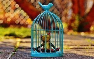 Frosch-Käfig