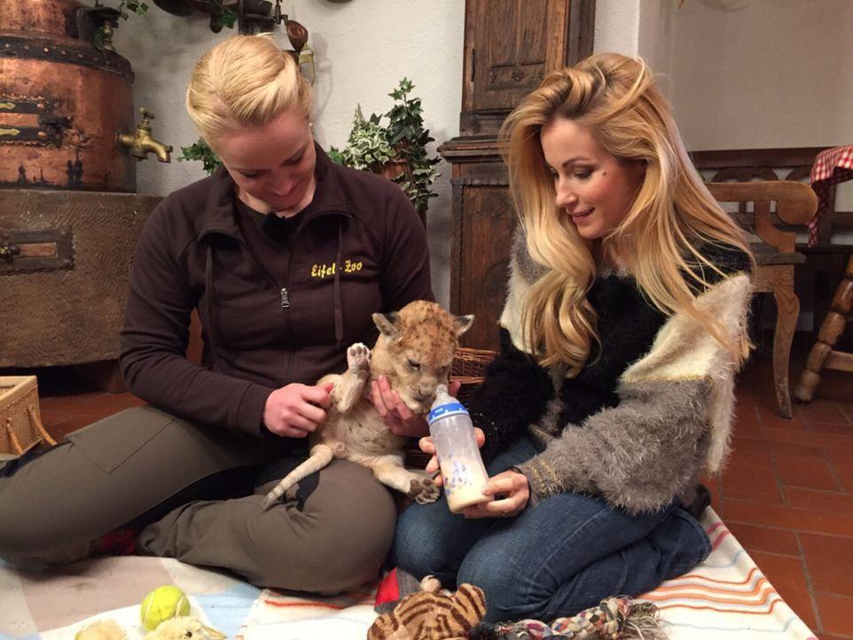 Andrea Kaiser (r.) besucht das 6 Wochen alte Löwenbaby Malor im Eifel-Zoo in Lünebach ... - Bildquelle: SAT.1