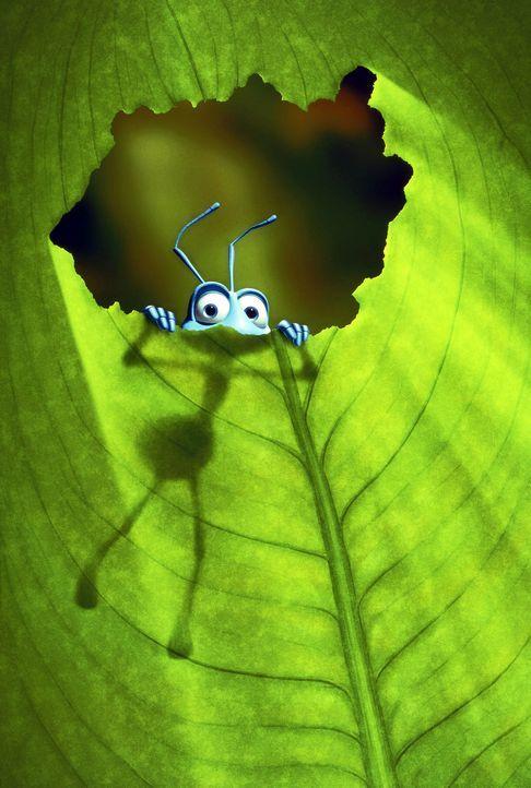Dank seiner Tollpatschigkeit erlebt die Arbeiterameise Flik ein aufregendes Abenteuer! - Bildquelle: Disney/Pixar