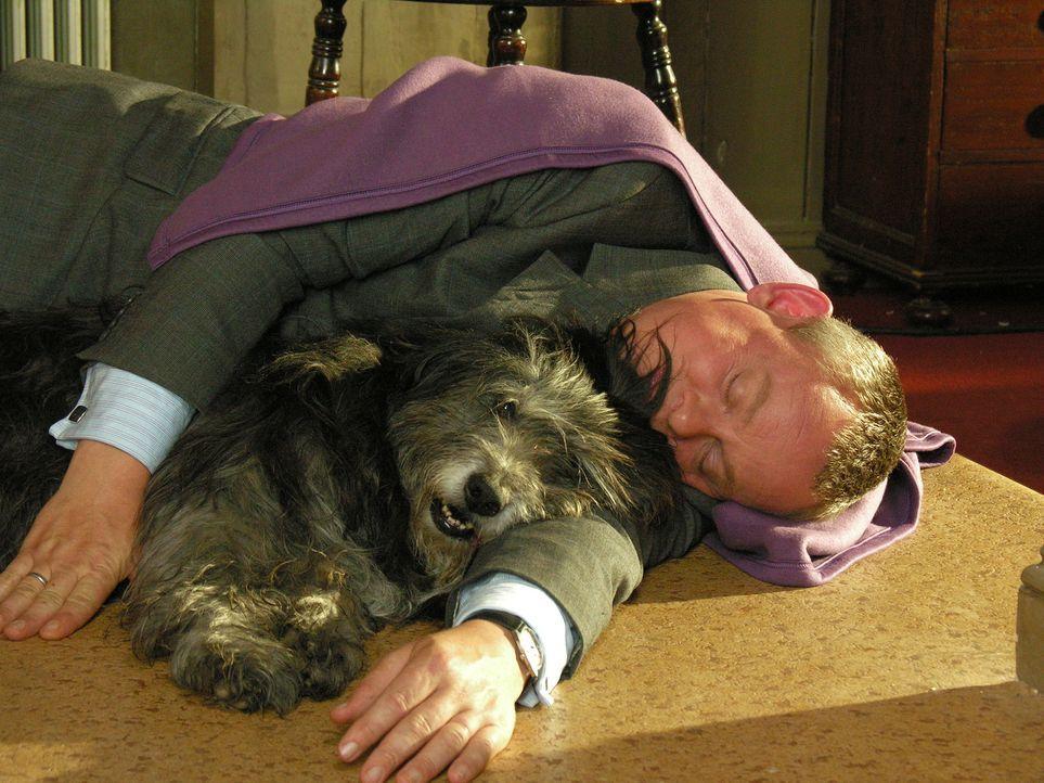 Der beste Freund des Menschen: Auch Doc Martin (Martin Clunes) muss erkennen, dass man nicht nur in den Armen einer schönen Frau gut schlafen kann .... - Bildquelle: BUFFALO PICTURES/ITV