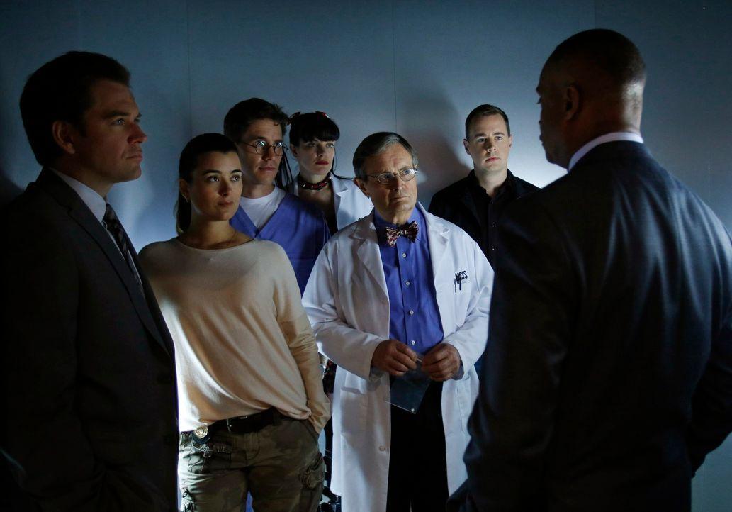 Ein neuer Fall wartet auf Tony (Michael Weatherly, l.), Ziva (Cote de Pablo, 2.v.l.), Jimmy (Brian Dietzen, 3.v.l.), Abby (Pauley Perrette, M.), Duc... - Bildquelle: CBS Television
