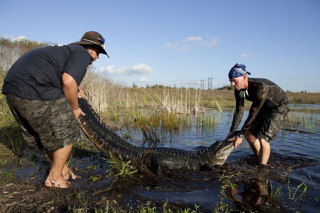 (1. Staffel) - Kennen keine Angst: die Gator Boys Paul Bedard (r.) und Jimmy Riffle (l.) ... - Bildquelle: Bob Croslin 2011 Discovery Communications