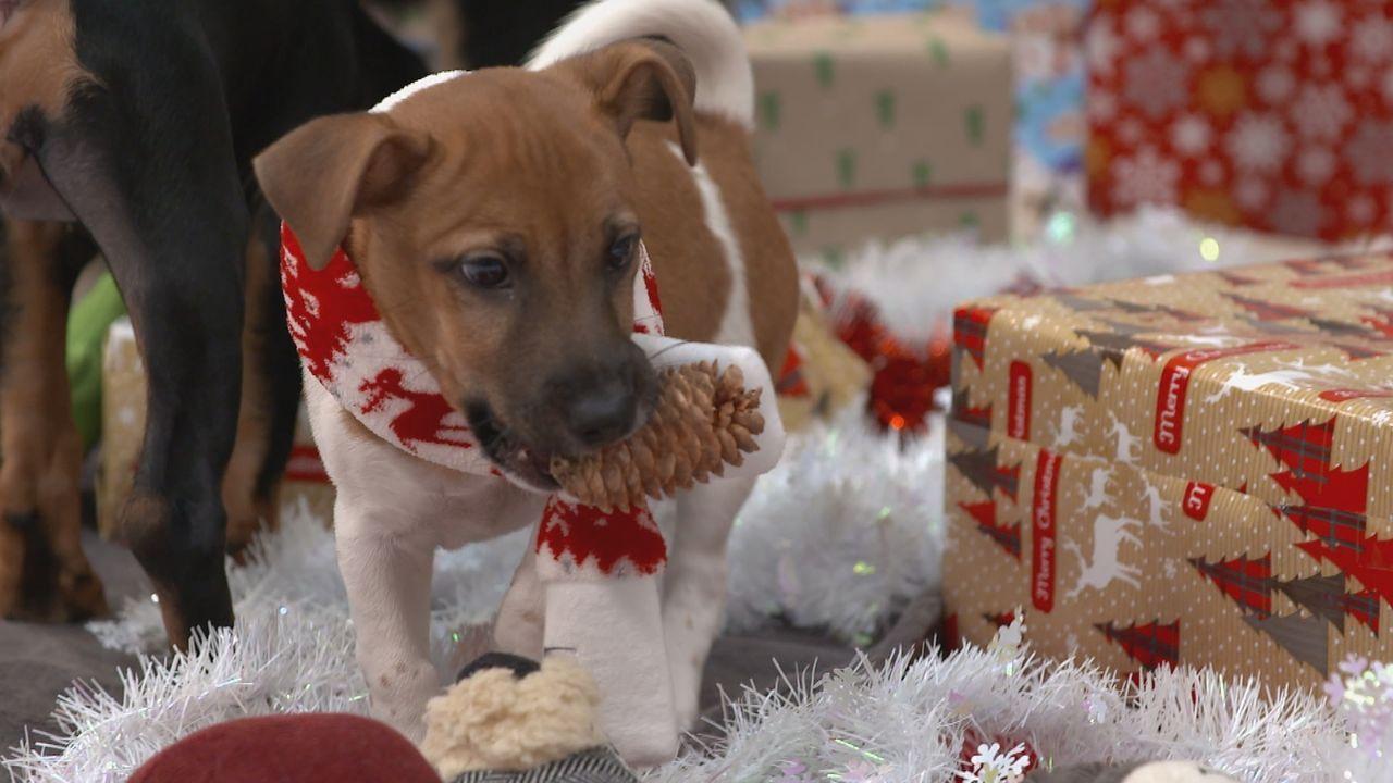 Weihnachtswelpen - Eine tierische Bescherung - Bildquelle: sixx
