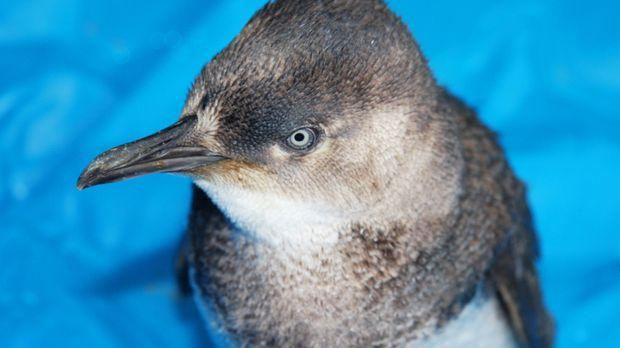 Pinguine in der Not und Dr. Brown soll helfen ... © WTFN Entertainment