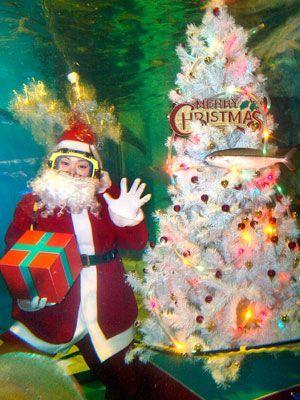 Weihnachten im Aquarium - Bildquelle: AFP