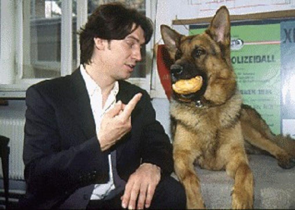 (1.- 4. Staffel) - Rex schafft es immer wieder, Kommissar Moser (Tobias Moretti, l.) seine Wurstbrötchen abzuluchsen. Seiner ausgeprägten Vorliebe... - Bildquelle: Sat.1