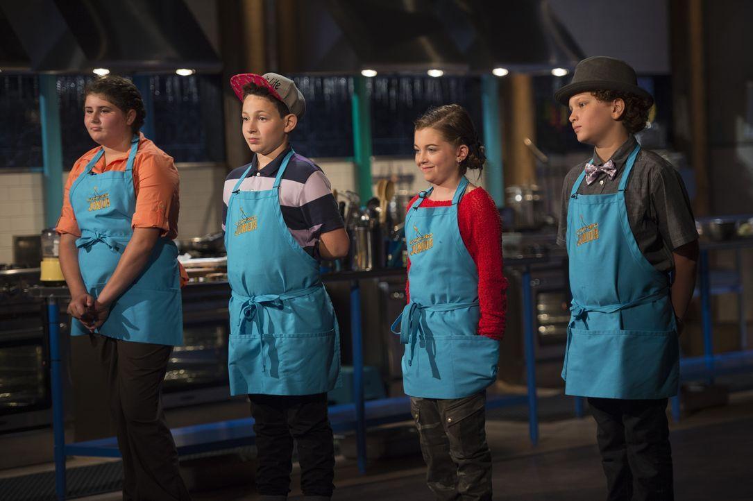 Geboren, um zu Kochen: (v.l.n.r.) Megan Norz, Aidan Friedson, Noelle Smith und Noah Jenkins ... - Bildquelle: Scott Gries 2015, Television Food Network, G.P. All Rights Reserved