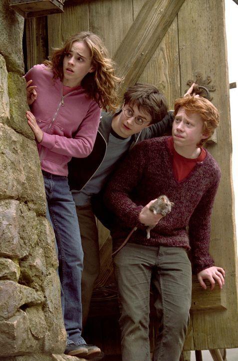 Können Ron (Rupert Grint, r.) und Hermine (Emma Watson, l.) Harry Potter (Daniel Radcliffe, M.) vor dem gefährlichen Sirius Black beschützen? - Bildquelle: Warner Television