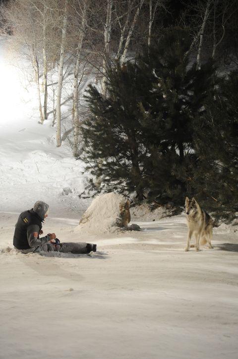 Beim Absprung aus dem Lift, bricht sich Dan (Kevin Zegers) beide Beine. Dumm nur, dass hungrige Wölfe in der Gegend beheimatet sind ... - Bildquelle: Fred Hayes Frostbite Features, Inc.