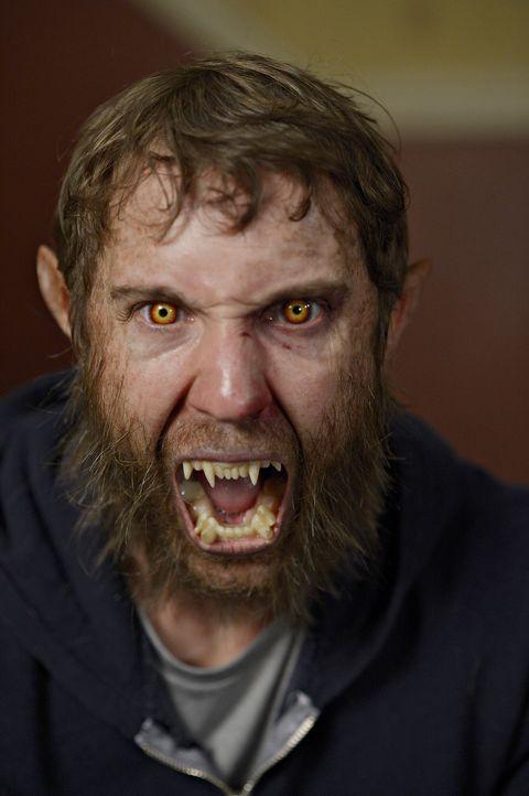 Kommt Josh (Sam Huntington) wirklich mit dem zurecht, was sein Wolf tut? - Bildquelle: Philippe Bosse 2014 B.H. 4 Productions (Muse) Inc. ALL RIGHTS RESERVED.