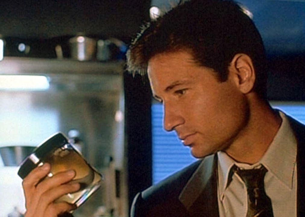 Mulder (David Duchovny) betrachtet ungläubig den Plattwurm, den Scully in einer aus der Kanalisation von Newark gefischten Leiche gefunden hat. - Bildquelle: TM +   2000 Twentieth Century Fox Film Corporation. All Rights Reserved.