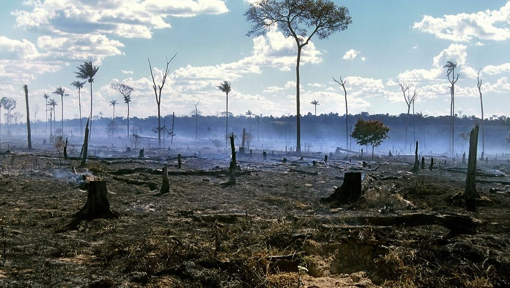 Wald in Gefahr
