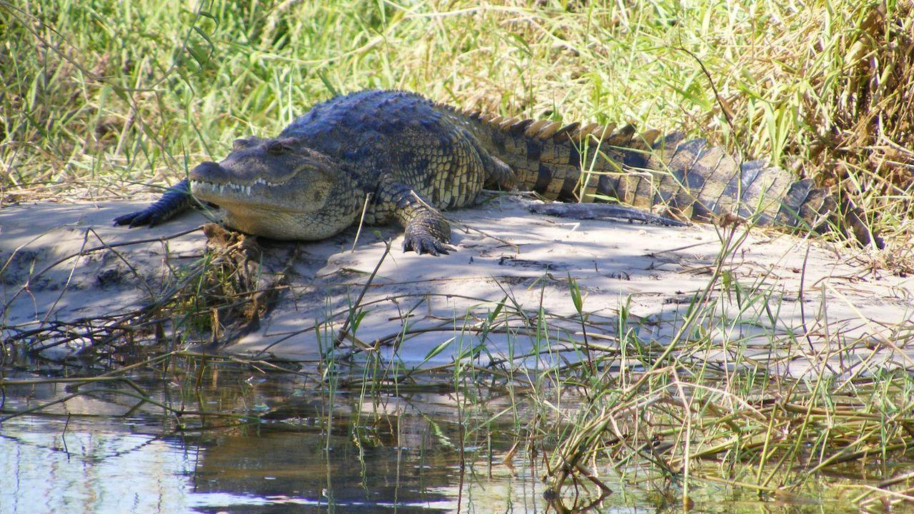 Reptil2 - Bildquelle: dpa/tmn