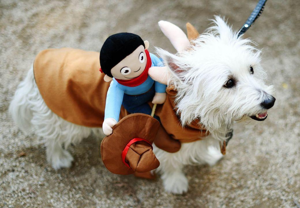 Hund im Bullenreiten-Kostüm - Bildquelle: getty-AFP