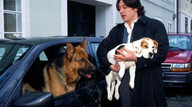 Rex hat die Beagle-Hündin aufgespürt, die nach dem Tod des Professors aus dem...