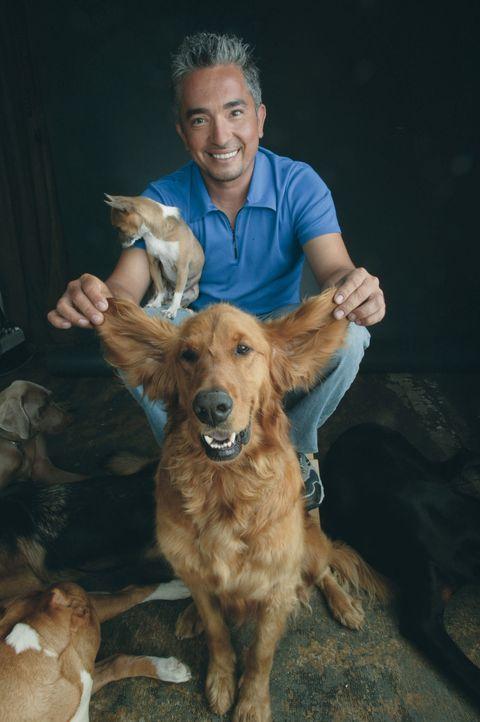 Egal ob Bello, Fiffi oder Wuffi, Cesar Millan hat für jeden Vierbeiner die passende Lösung parat. Der Hundeprofi ist momentan der berühmteste und ge... - Bildquelle: Rive Gauche Intern. Television