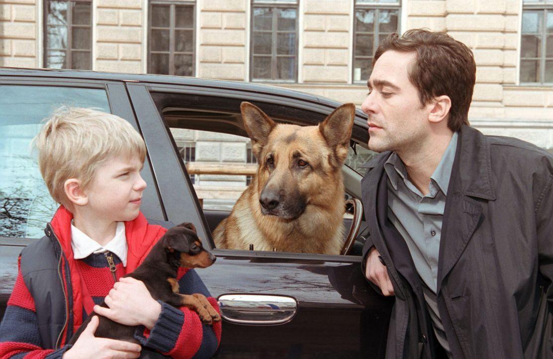 Marc (Alexander Pschill, r.) und Rex bringen den kleinen Sascha (Calvin Klaus, l.) zur Schule. - Bildquelle: Ali Schafler Sat.1