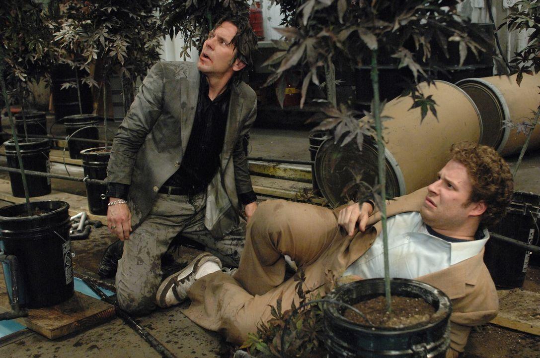 im Himmel? Gerichtsbote Dale (Seth Rogen, r.) hat nur ein Interesse: das Kiffen. Doch als er im Kiffer-Paradies landet, will ihm der Drogenbaron Ted... - Bildquelle: 2008 Columbia Pictures Industries Inc. All rights reserved.