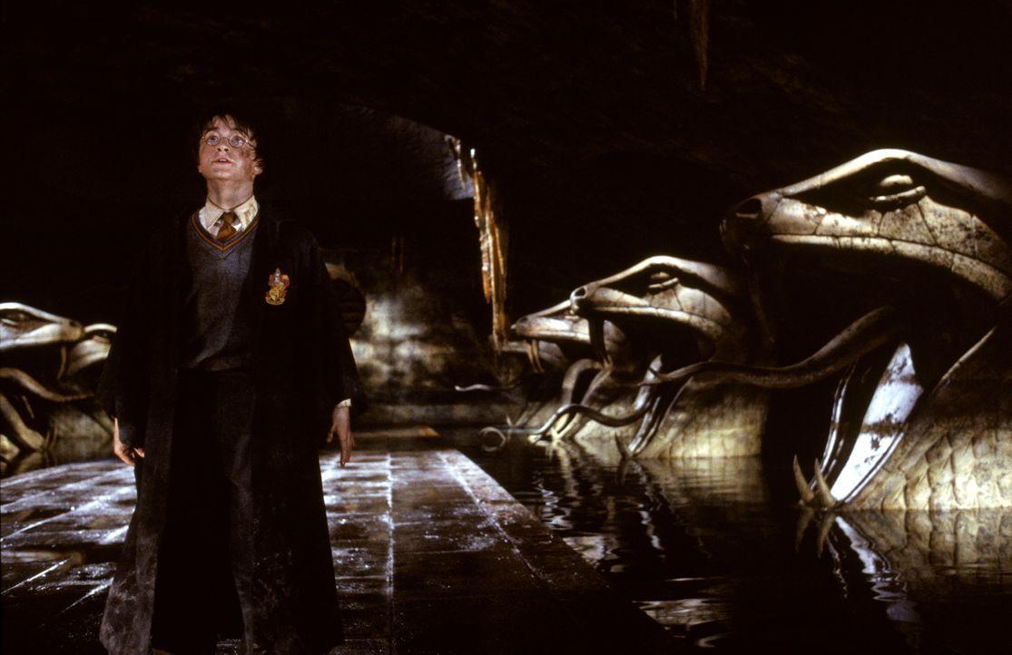 Auf dem gefährlichen Weg zur geheimnisvollen Kammer des Schreckens: Harry Potter (Daniel Radcliffe) ... - Bildquelle: Warner Bros. Pictures