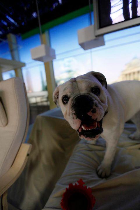 fruehstuecksfernsehen-studiohund-lotte-in-action-im-studio-102 - Bildquelle: Ingo Gauss
