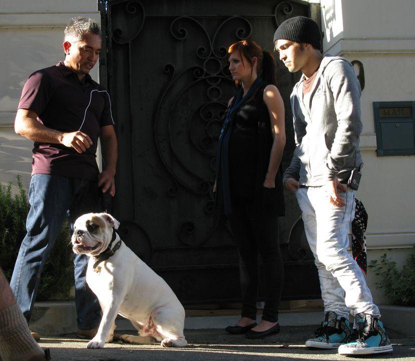 Der schwangere Popstar Ashlee Simpson (M.) bittet Cesar (l.) um Hilfe. Sie und ihr Mann Pete Wentz (r.) vergöttern die englische Bulldogge Hemingway... - Bildquelle: Rive Gauche Intern. Television