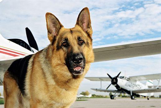 Rex versucht, einen Mord auf dem Privatflughafen zu verhindern. - Bildquelle:...