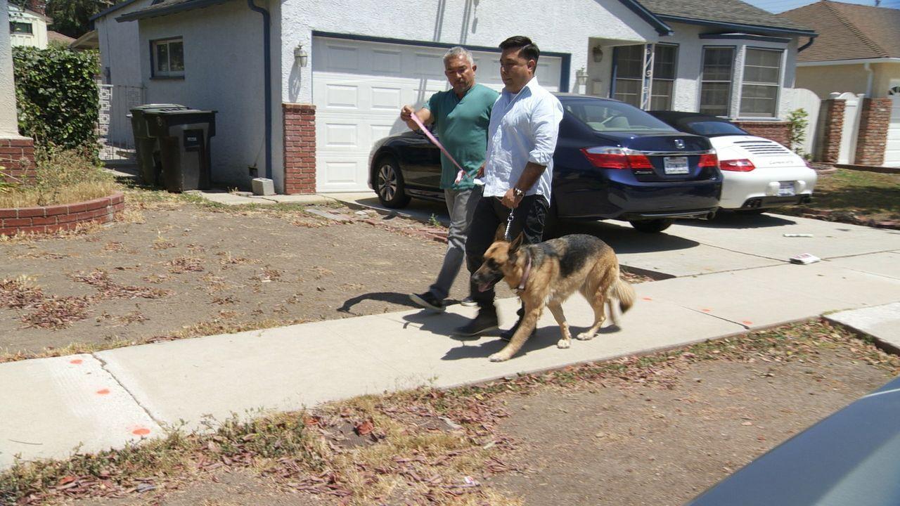 Ron (r.) braucht dringend Cesars (l.) Hilfe, denn dank seines Hundes Savannah wird Ron zu keiner Familienfeier mehr eingeladen und von fast allen ge... - Bildquelle: National Geographic Channels