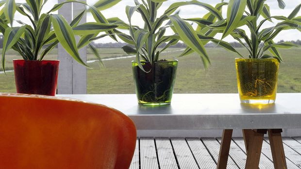 Wohnzimmer Blumen Und Pflanzen Als Deko