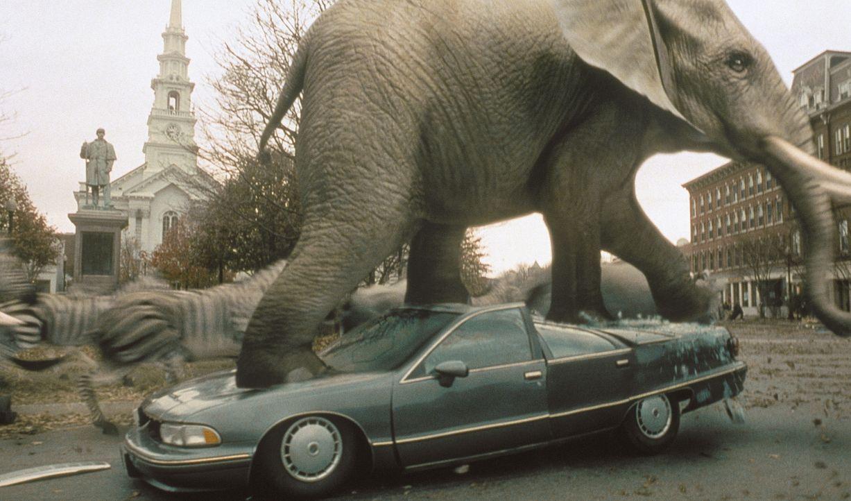 """Ich bin ein Elefant, Madame: Eine von """"Jumanji"""" herbeigezauberte wilde Elefantenherde stampft durch den Ort und hinterläßt eine Schneise der Verwüst... - Bildquelle: COLUMBIA TRISTAR INTERNATIONAL TELEVISION"""