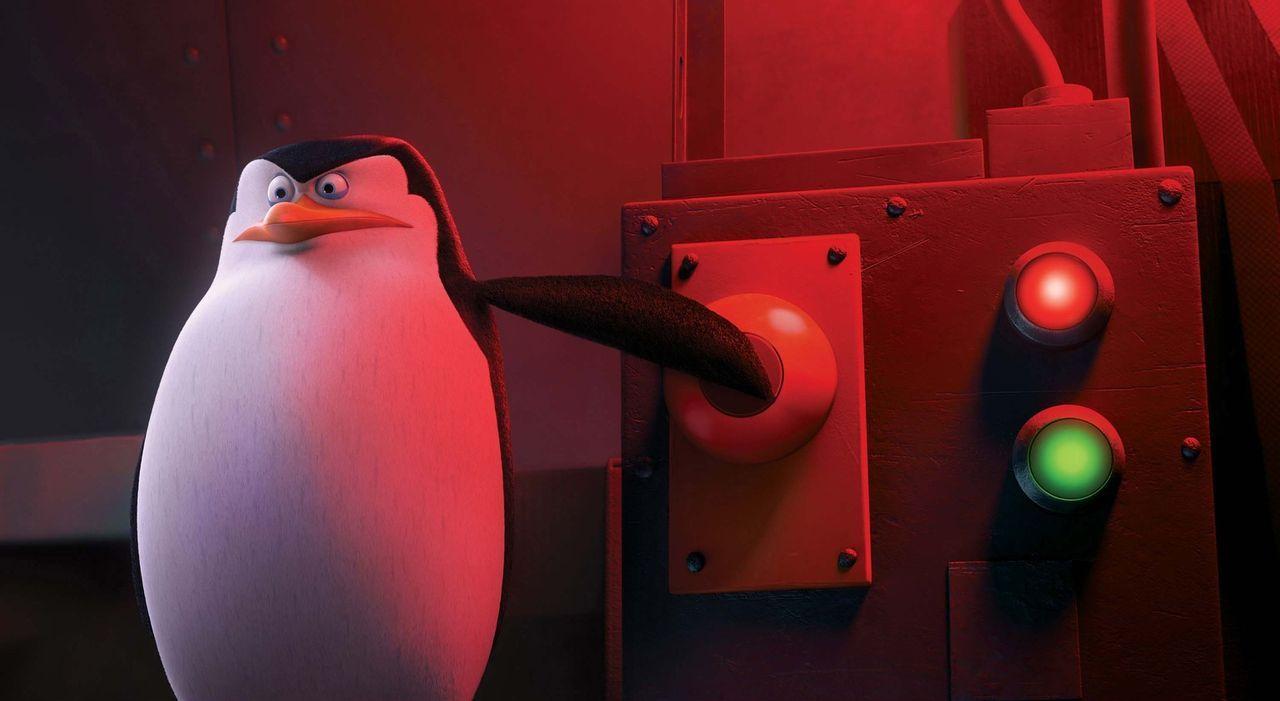 Die vier Pinguine Skipper (Bild), Kowalski, Rico und Private sind das perfekte Team und haben schon zahlreiche Missionen erfolgreich abgeschlossen.... - Bildquelle: 2014 DreamWorks Animation, L.L.C.  All rights reserved.