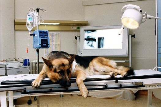 Bei einem nächtlichen Schießduell ist Rex verletzt worden. - Bildquelle: Ali...