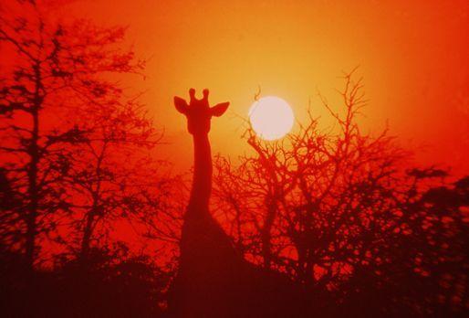 Die lustige Welt der Tiere - In einmaligen Aufnahmen werden nicht nur traumha...