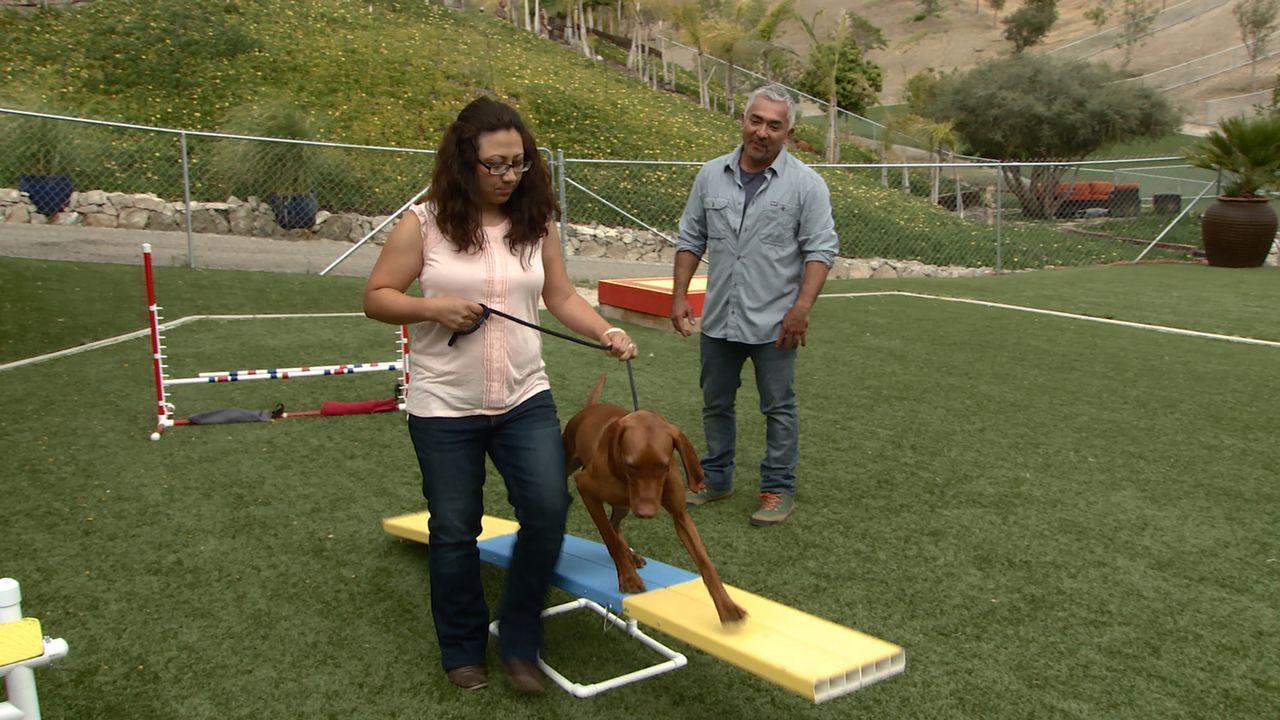 Cesar (r.) versucht, Sandra (l.) und ihrem Ehemann zu helfen, mit ihrem ungarischen Vorstehhund Whiskey zurechtzukommen ... - Bildquelle: NGC/ ITV Studios Ltd
