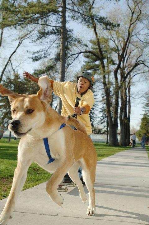 Als Calvin (Kyle Massey) den Bernhardiner Tyko aus dem Tierheim holt, wähnt er das Preisgeld vom Hundewettbewerb schon in seiner Tasche. Doch schon... - Bildquelle: The Disney Channel