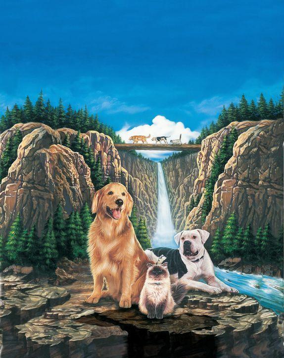 """""""Zurück nach Hause - Die unglaubliche Reise"""" - Artwork - Bildquelle: Walt Disney Pictures. All Rights Reserved."""