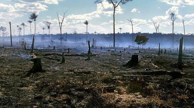 Wald in Gefahr2