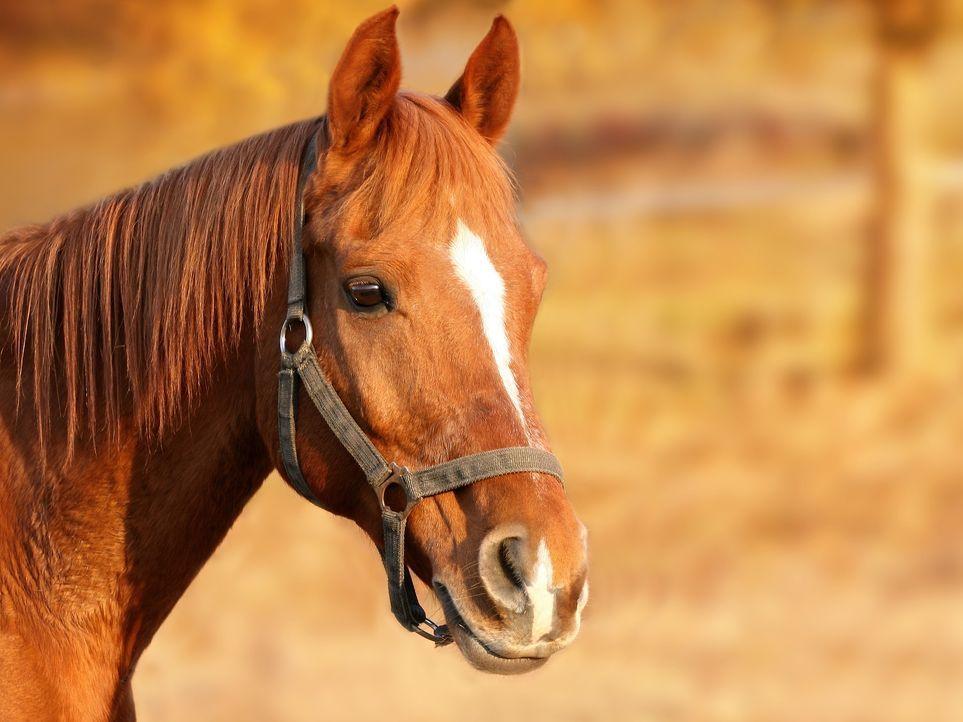 horse-1201143_1920 - Bildquelle: Pixabay