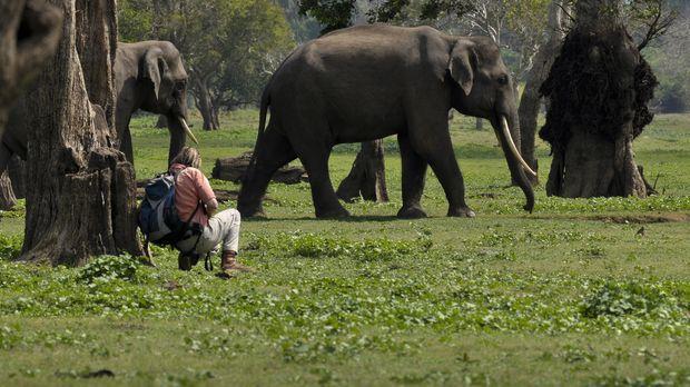 Austin Stevens reist nach Sri Lanka, um die seltenen asiatischen Elefanten vo...