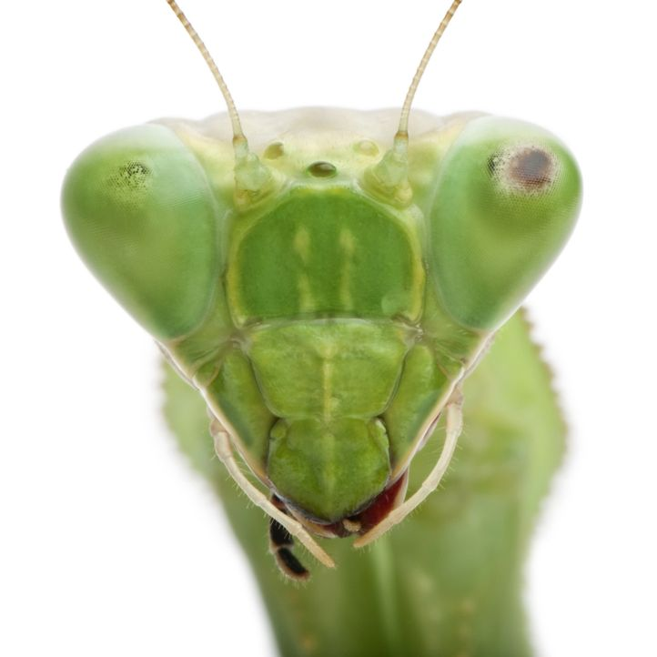Auf der Erde existieren rund 10 Trillionen Insekten. Sie bevölkern den Planeten seit Urzeiten. Viele Kulturen achten, fürchten oder verehren sie als... - Bildquelle: Pond5, Inc.