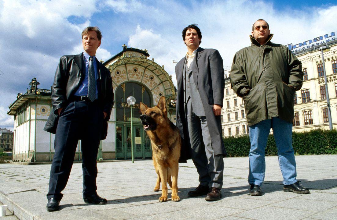 Böck (Heinz Weixelbraun, l.), Moser (Tobias Moretti, M.), Höllerer (Wolf Bachofner, r.) und Rex beobachten Dr. König. - Bildquelle: Ali Schafler Sat.1