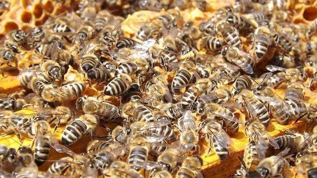 Bienenstock-Imkerei