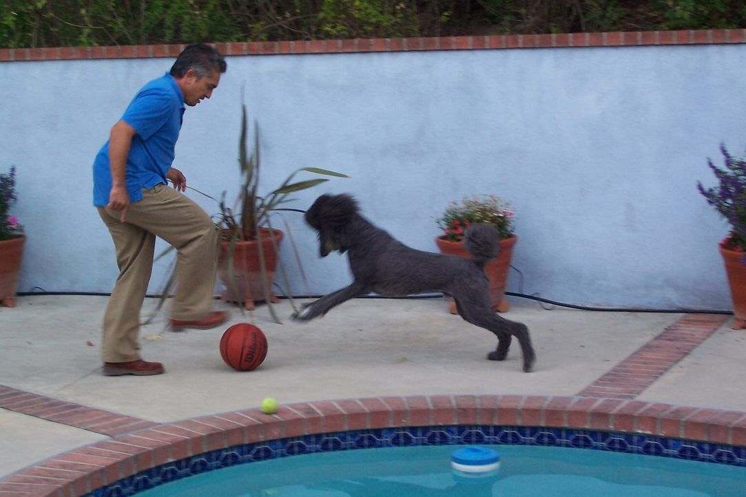 Hundeflüsterer Cesar Millan kümmert sich um den Pudel Teddy, der eine schlechte Angewohnheit hat ... - Bildquelle: Rive Gauche Intern. Television