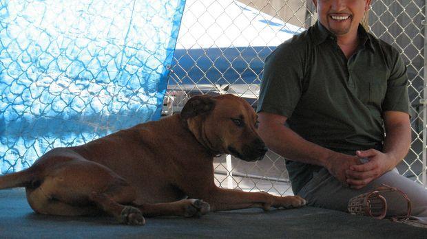 Hundeflüsterer Cesar Millan kümmert sich heute um die Rigdeback-Boxer-Mischli...