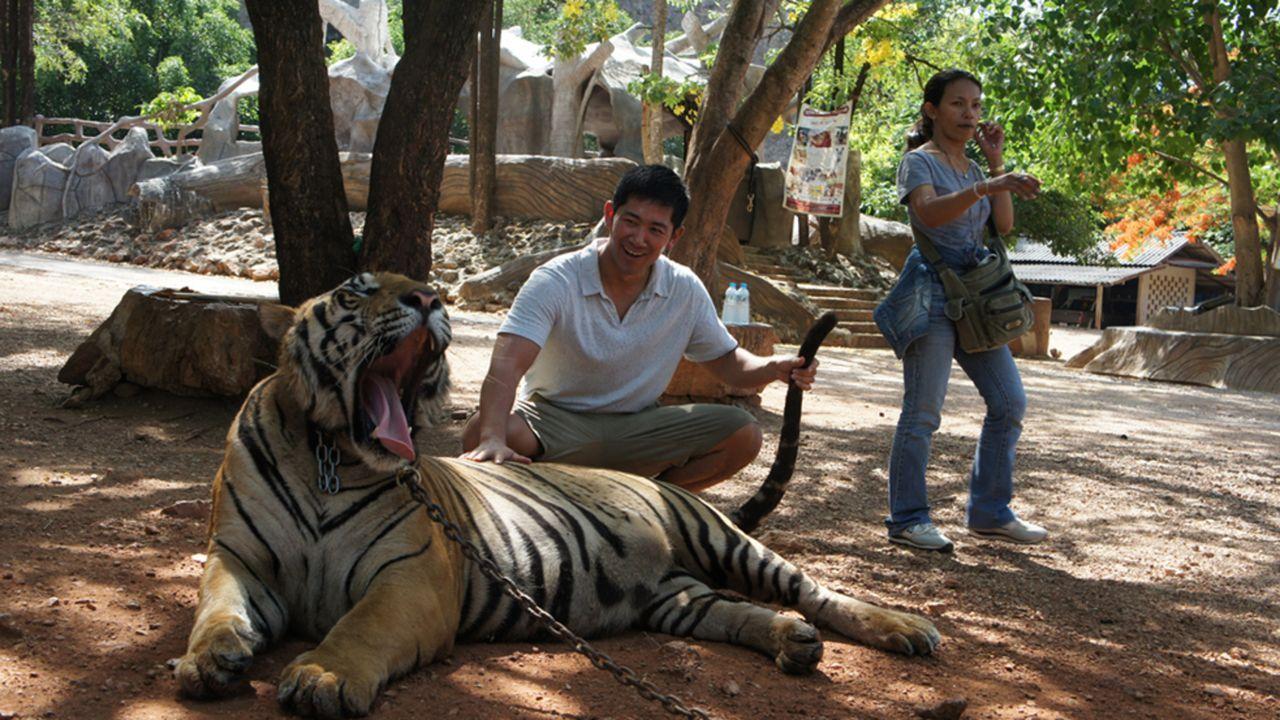 Der Tiger verliert seinen natürlichen Lebensraum, Klimaveränderungen und rücksichtslose Jäger gefährden den Fortbestand der prächtigen Raubkatzen au... - Bildquelle: 2011 CURRENT TV, LLC