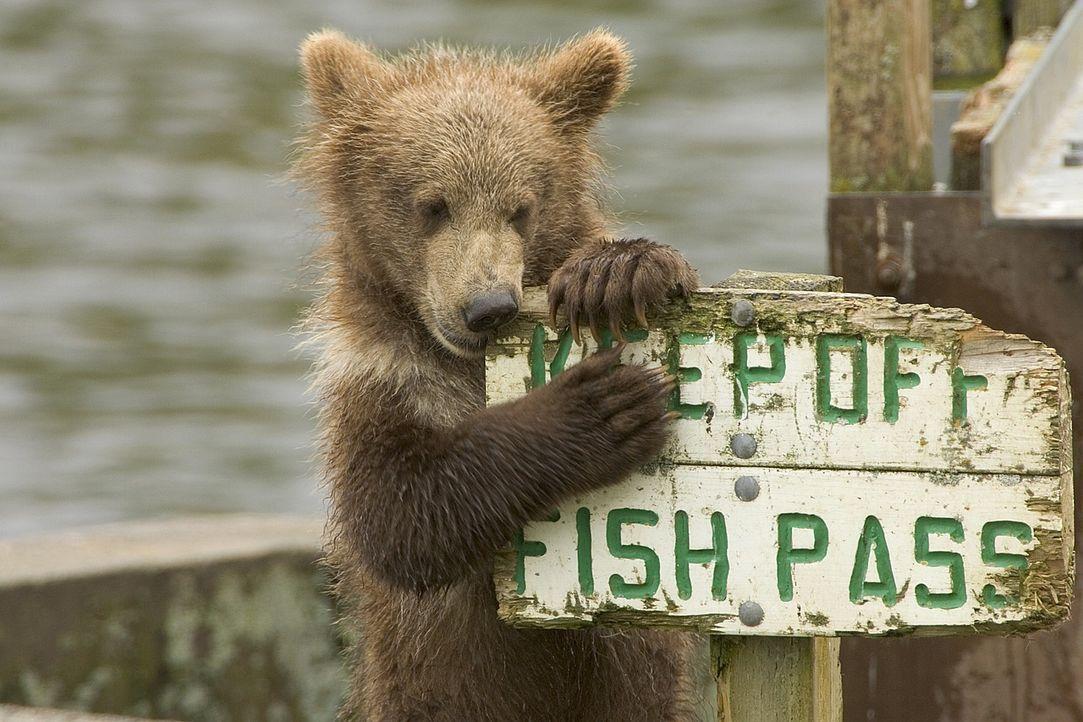 bear-680334_1280 - Bildquelle: Pixabay