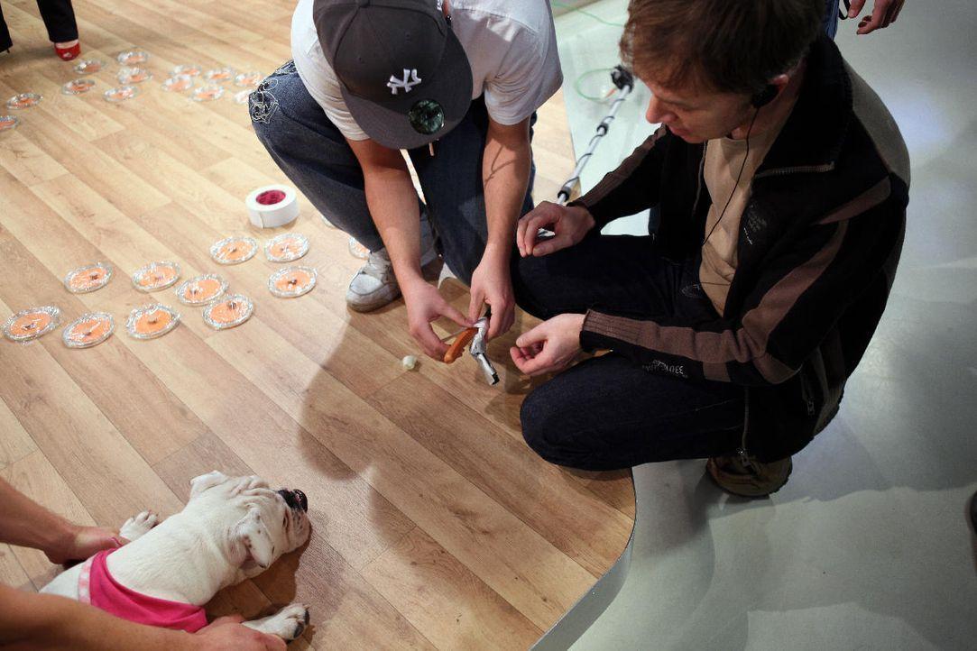 fruehstuecksfernsehen-studiohund-lotte-in-action-im-studio-088 - Bildquelle: Ingo Gauss